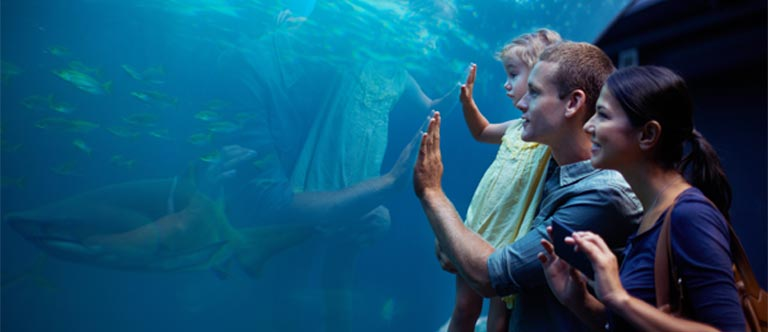 Monterey Bay Aquarium Package at Comfort Inn Carmel by the Sea , California