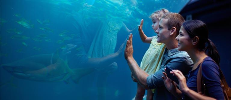 Monterey Bay Aquarium Package at Comfort Inn Carmel by the Sea , California